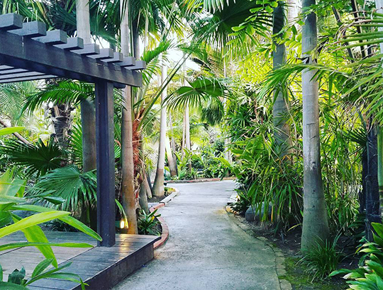 Pathway through the Bahia Resort Hotel's lush tropical garden retreat
