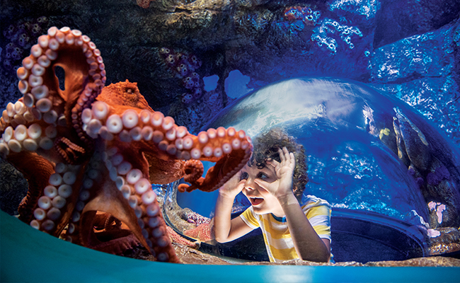 Young boy experiencing an encounter with an octopus at SeaWorld