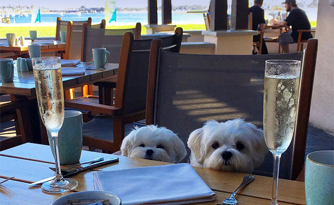 Pet Friendly Yappy Hour at Moray's Mission Bay